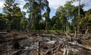 120501_COPE_deforestation.jpg.CROP.rectangle3-large