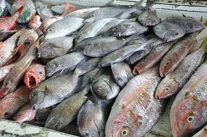 fish-640