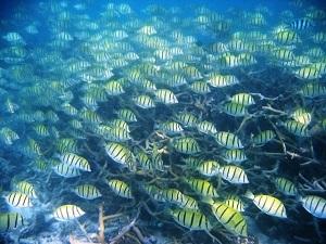 reef-fish640
